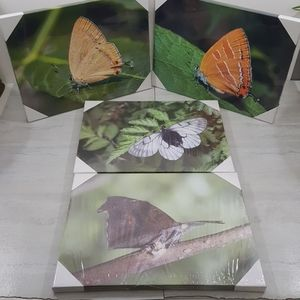 Butterfly 4pc Canvas Photo Prints (Sealed)
